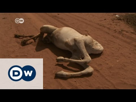 Ethiopia - drought highlights aid shortages | DW English