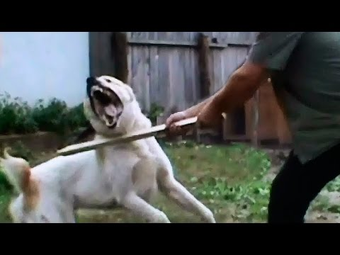 asian dog fight