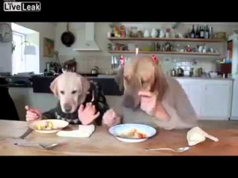 Khmer Hot News Today   Cambodia Hot News this week 2014   Lovely Dogs Eating Food