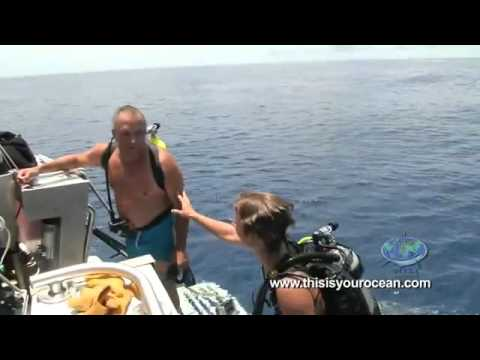 Tiburón da tremendo susto a un buzo