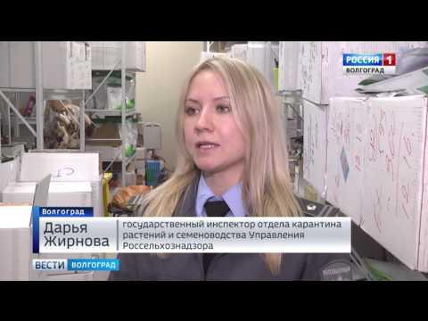 Специалисты Россельхознадзора проверяют качество посадочного материала в Волгоградской области