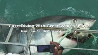 Gansbaai South Africa  City new picture : Cage Diving with Great White Sharks in Shark Alley (Gansbaai, South Africa)