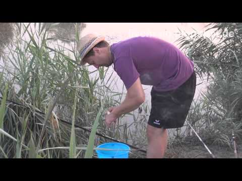 ловля рыбы на оросительных каналах