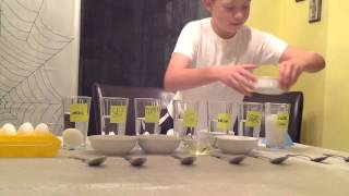 The EggHead Floater By B.Ball (science Project)