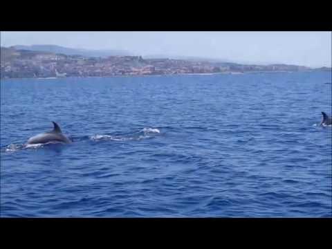 delfini avvistati nello stretto di messina a luglio 2016