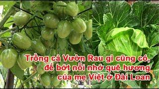 Trồng cả Vườn Rau gì cũng có, để bớt nỗi nhớ quê hương của mẹ Việt ở Đài LoanVườn Rau, vườn rau quả, rau gì cũng có, rau quê nhà, trồng rau, làm vườn rauTheo danviet.vn