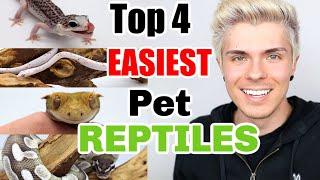 Top 4 EASIEST Pet Reptiles! by Tyler Rugge
