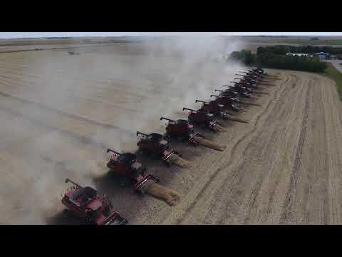 Canola harvest for Foodgrains