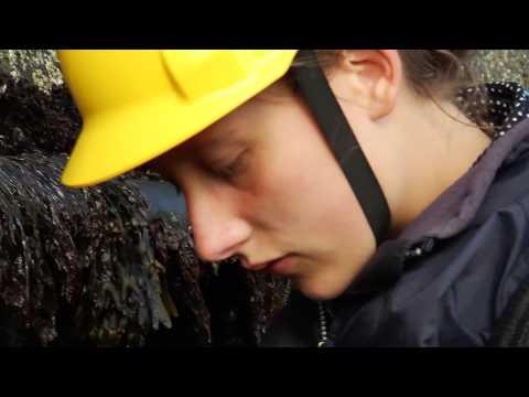 Meereswettbewerb 2013 startet in Hamburg - Wie reagieren Seepocken  ...
