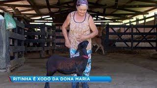 Animal de estimação é xodó de dona de casa em Itapetininga