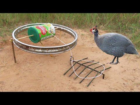 Creative Unique DIY Guinea Chicken Trap Using Dupro Cans & Bike Crank - Fantastic Wild Bird Trap