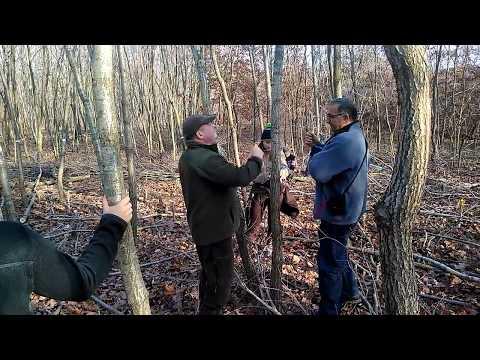 Lucrari de ingrijire in arborete tinere de gorun OS Valea Frumoasei R.A.