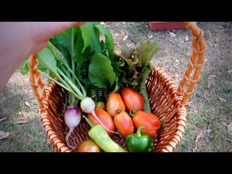 Weekend Garden Jobs, Planting Onions + Making Fertiliser | Garden VLOG
