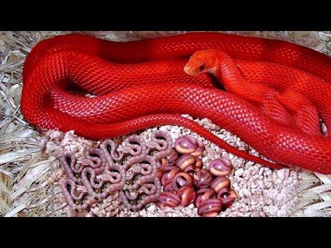 7 Serpientes Más Coloridas Que Son Únicas En El Mundo