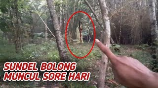 Video Sundel Bolong Muncul Sore hari MP3, 3GP, MP4, WEBM, AVI, FLV Maret 2019