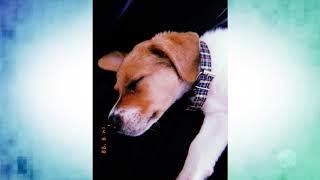 Falsa funcionária de pet shop furta cachorro em Sorocaba