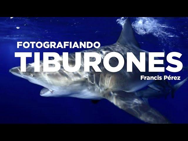 Fotografiando TIBURONES. Francis Pérez