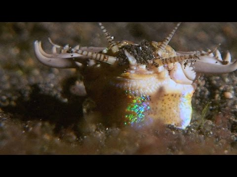 Worms attacking creatures in ocean just like from movie Tremors