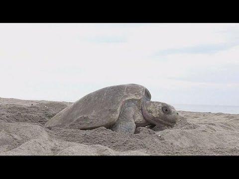 Drones για την προστασία των χελωνών και των αυγών τους – hi-tech
