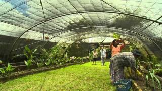 Jardin de Melrose à l'Ile Maurice