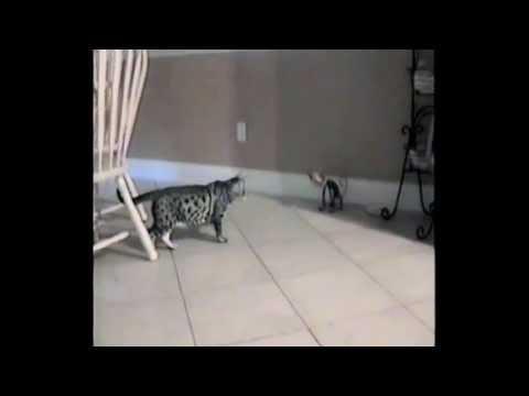 il-gatto-e-la-statuetta-288
