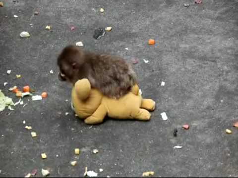 小猴子去哪都要帶上他的玩伴,超級卡哇伊~