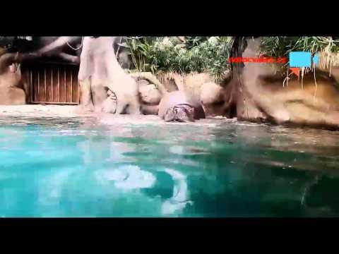 slon a hroch rapují v zoo