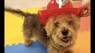 LIVE: Rescue This Adoptable Dog in New York City Today - FRANKIE | The Dodo + Clear The Shelters by The Dodo