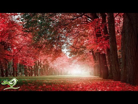 Beautiful Relaxing Music - Piano, Cello & Guitar Music by Soothing Relaxation