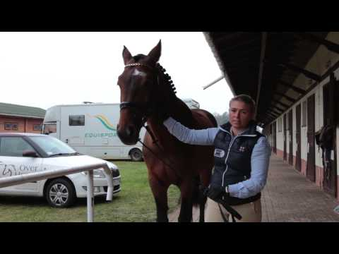 Przegląd konia
