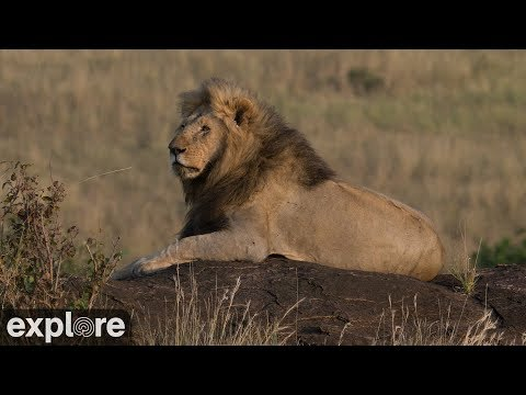 Live-Cam: Wildtiere in Afrika - Multi Cams (an mehr ...
