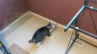 外されたガラス天板気づかずに、床に着地しやや困惑する猫