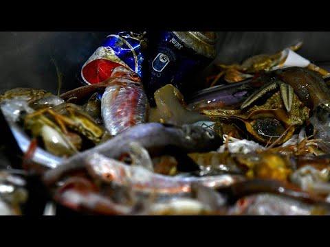 Italien: Fischer kämpfen mit »Clean Sea Life« gegen V ...