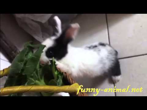 cute-bunny-eating-vegetable-on-easter-monday