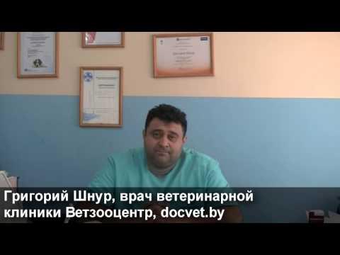 Ветклиника в Могилеве | Что делать при инфекционных заболеваниях домашних животных?