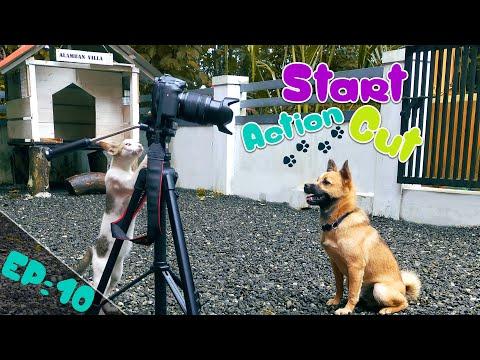 Start Action Cut! 🤣   Puppykuttan webseries malayalam comedy EP 10