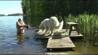 Old Man Trying To Get His Dog To Take A Bath
