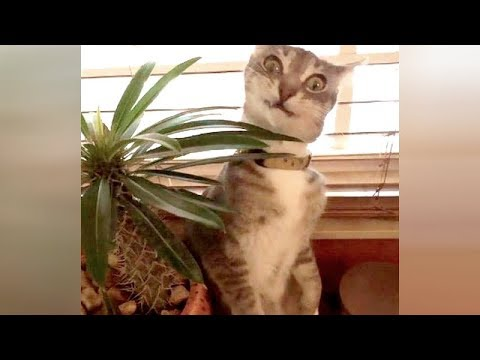Funny animals - Watch and you will die laughing! Really the FUNNIEST ANIMALS!