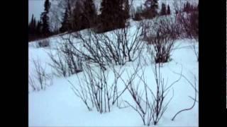 2. 2012 Arctic Cat M1100 Turbo sno pro 162