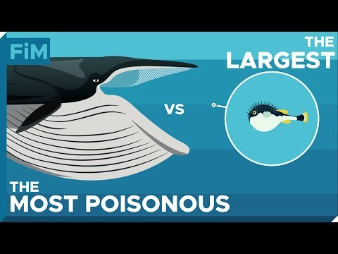 What If a Whale Swallowed a Poisonous Pufferfish? ---- Tetrodotoxin explained