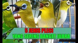Download Video INI DIA 5 JENIS PLECI YANG SERING BANGET DAPET JUARA DI KONTES MP3 3GP MP4