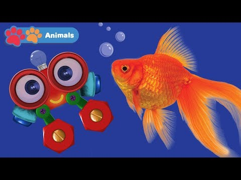 Learn Sea Animals for Kids with Robi   Animals Names & Sounds   Zoo & Wild Animals for Children