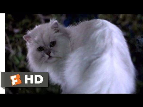 Stuart Little (1999) - Not Bad for a House Cat (10/10)   Movieclips