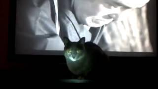 Nonton Samurai Cat Film Subtitle Indonesia Streaming Movie Download