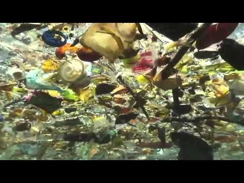 Plastics In Oceans: More Damaging Than Climate Change