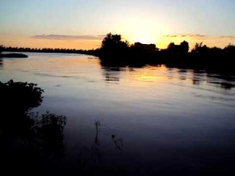 Extraño pez filmado en el río Victoria