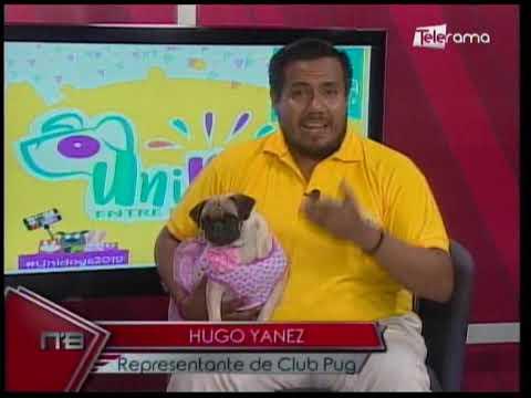 Unidogs 1era feria interclubes de mascotas se realizará en Guayaquil