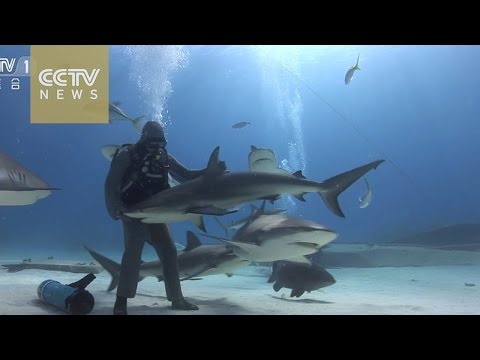 Shark Hypnosis