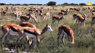 Kalahari Botswana  city photos gallery : Kalahari Game Reserve, Botswana mit Liane Merbeck - © Abendsonne Afrika