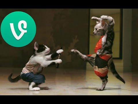 Funny Cats Videos – Funny Animals – Funny Dogs – Cool Cute animals August 2014 #1